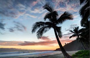 Les trésors de la Réunion
