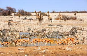 De la Namibie au Botswana