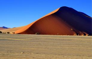 Flamboyante Namibie