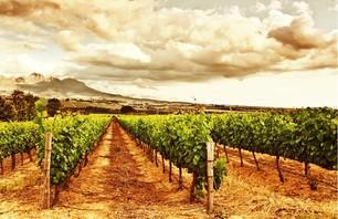 De la route des vins à la route des jardins