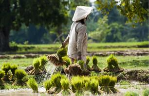 Bangkok et la traversée du Laos